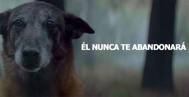 La nueva campaña contra el abandono animal hará que te emociones