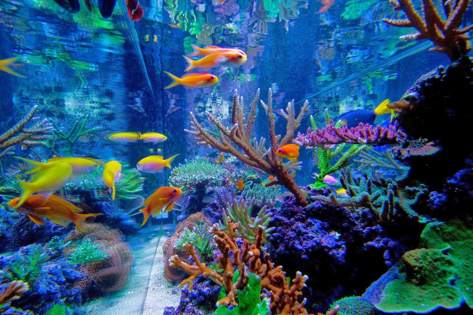 5 Ways To Change Your Aquarium Water Like A Pro Marine