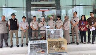Bandara Kualanamu Bongkar Penyelundupan 4 Ekor Burung Cendrawasih