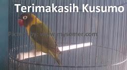 Pesan Lovebird Kusumo Dulu Penuh Inspirasi