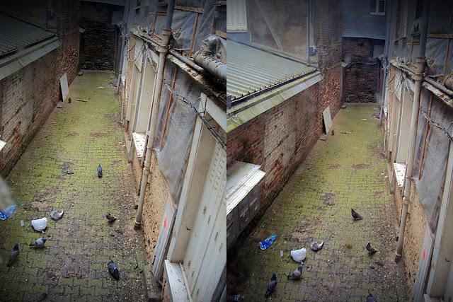 La cour intérieur du bâtiment, livré aux volatiles... 6, rue du Capitaine Dreyfus...