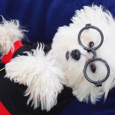 angel eyes para limpiar lagrimal perro maltes