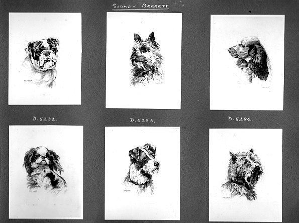 Photochrom Sidney Barrett Dogs