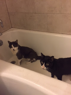 Teddy and Faraday in the bathtub