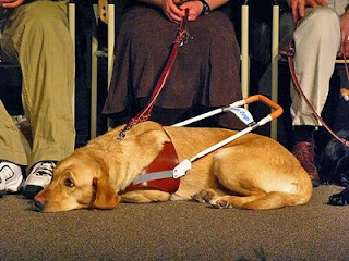 The Travels Of A Southeastern Guide Dog A New Guide Dog