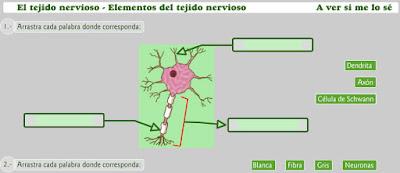 http://www.educa.jcyl.es/educacyl/cm/gallery/Recursos%20Boecillo/La%20celula/tejido8a.swf
