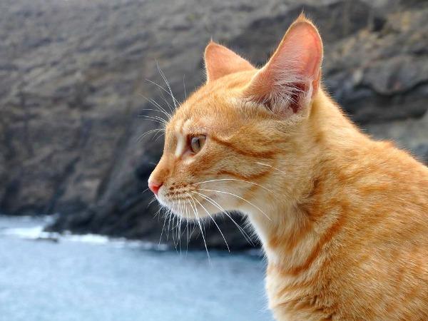 la gomera cats