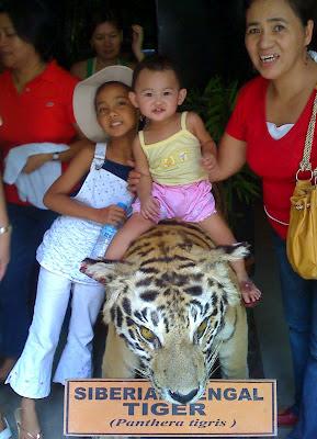 Stuffed Siberian Bengal tiger at Zoobic Safari Adventure