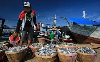 h harga ikan untuk menunjang kehidupan nelayan Kabar Terbaru- TATA NIAGA UNTUK PERDAGANGAN IKAN NELAYAN