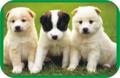 Pet named Buhari