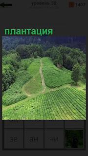1100 слов расположение плантации на холме 32 уровень