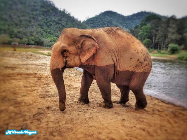 elefante Elephant Nature Park