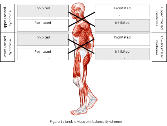 Kinesiology Sport Review Baseball Development Thoracic Spine Deficiencies Part 1