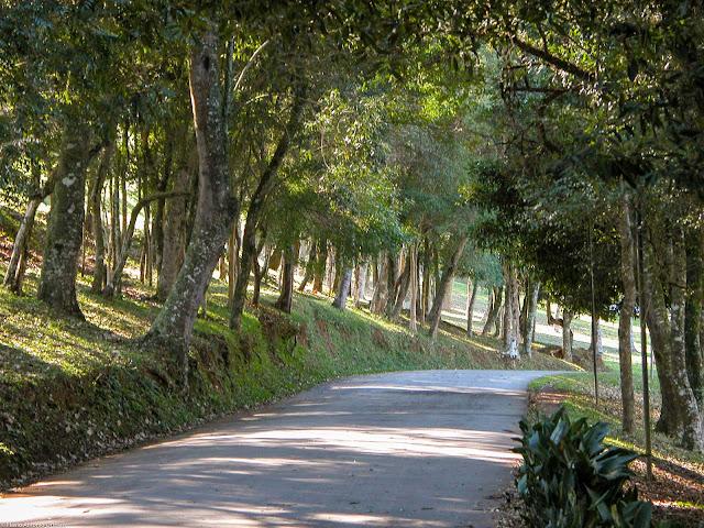 Estrada no Parque São Lourenço
