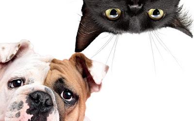 Pas i mačka - Panvet Subotica
