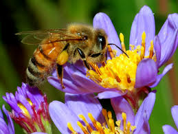 Πωλείται μέλι: Αποστολή σε όλη την Ελλάδα!!!