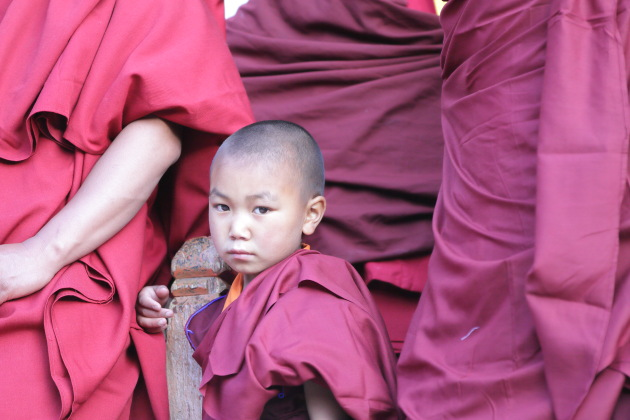 Young Buddhist Monk from Hemis Monastery, Ladakh