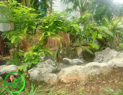 Vidio : Pemangkasan bonsai Asem Jawa menggunakan pisau