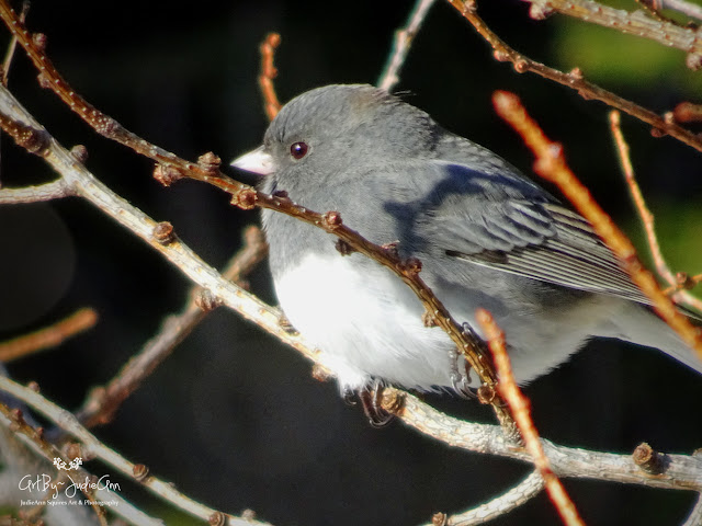 Small grey bird