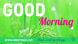Fresh-good-morning-wishes-with-green-HD