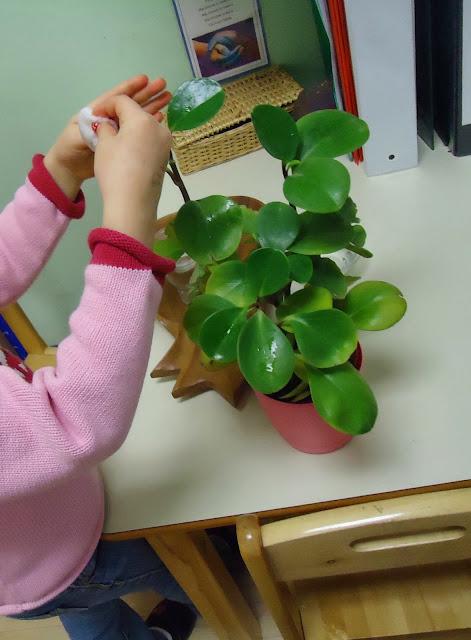 Cura delle piante