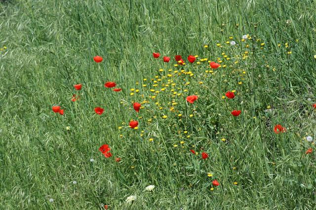 Two months, flowers, poppy field, Internal medicine