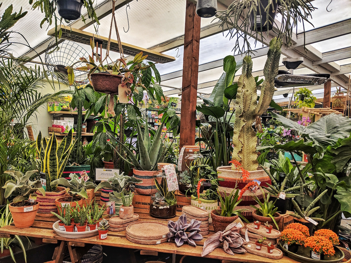 Cacti and other houseplants in Boma Garden centre