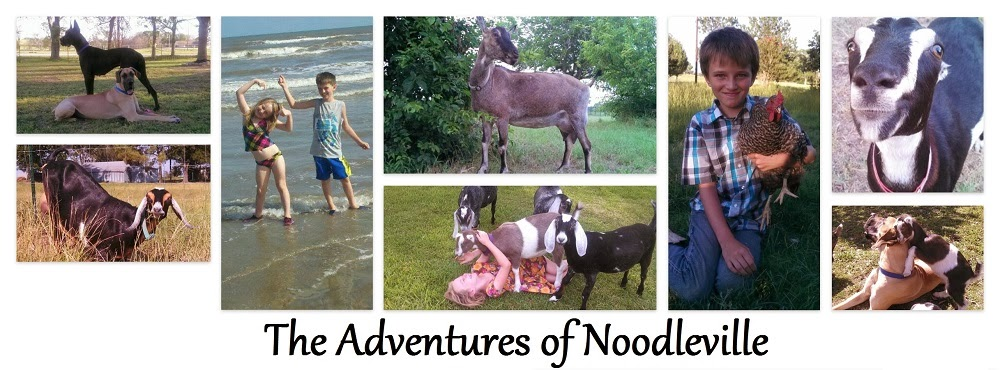 The Adventures of Noodleville