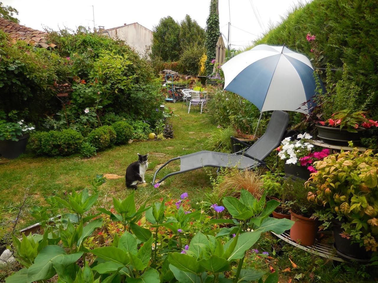 Planter Une Bordure De Buis cagouille's garden : par quoi vais je remplacer mes buis ?