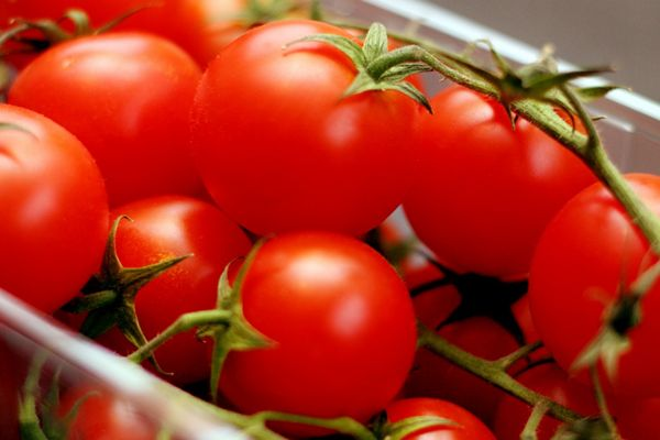 Tomatoes To Prevent Prostate Cancer