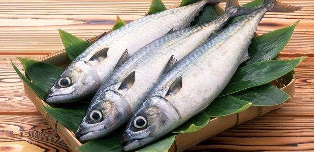 Tips Mengolah dan Memanfaatkan Daging Ikan