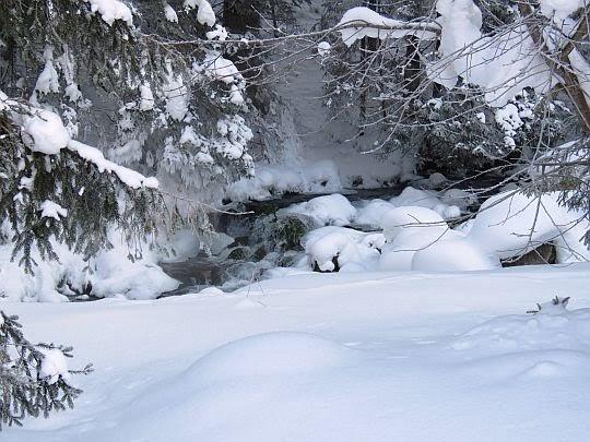 Olczyski Potok nieco poniżej wywierzyska.
