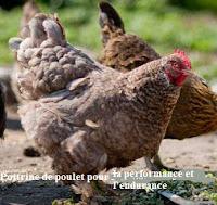 poitrine de poulet l'endurance et santé sexuelle.