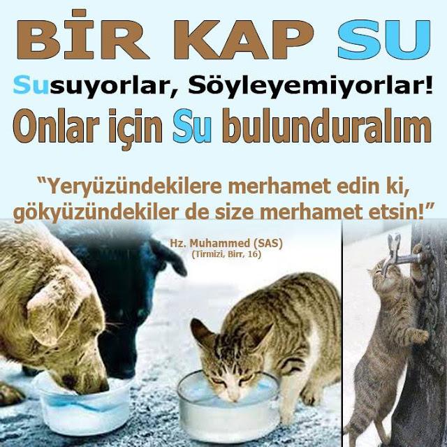 kedi, köpek, su, su ikramı, bir kap su, merhamet, merhamet hadis