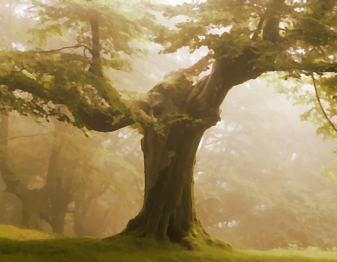 El árbol jamás duerme