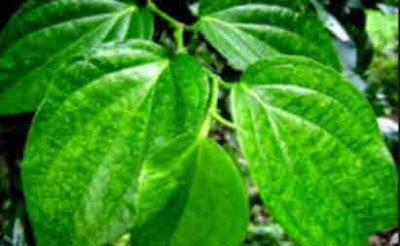 manfaat daun sirih untuk menghilangkan jerawat