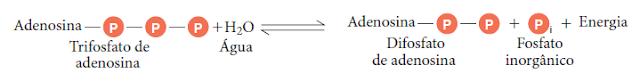 Hidrolise do Trifosfato de adenosina (ATP)