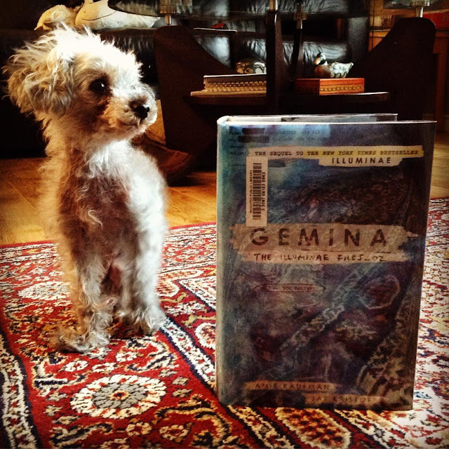 Murchie, a scruffy grey poodle, sits on a burgundy carpet. A hardcover copy of Gemina stands upright beside him. The book's cover is an oily, reflective blue that catches the pattern of the carpet, turning it into a mottled purple in places.