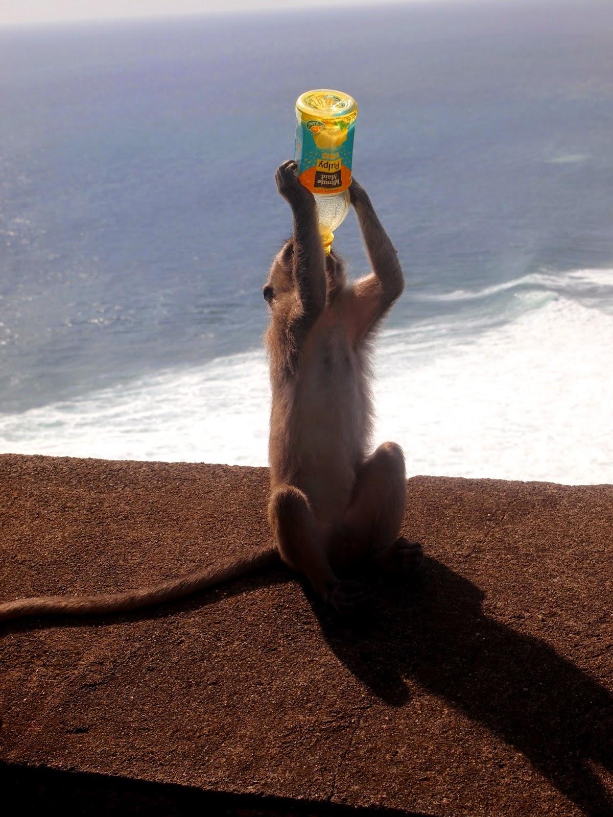 The monkey paradise
