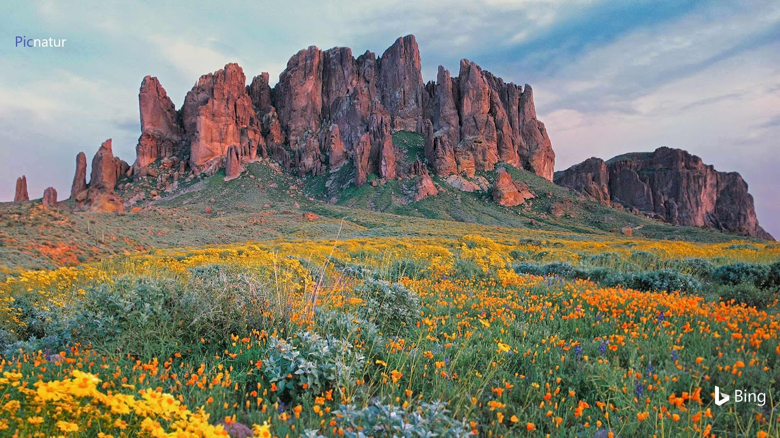 Wildflowers in bloom at Lost Dutchman State Park in Arizona © Tim Fitzharris/Minden Pictures