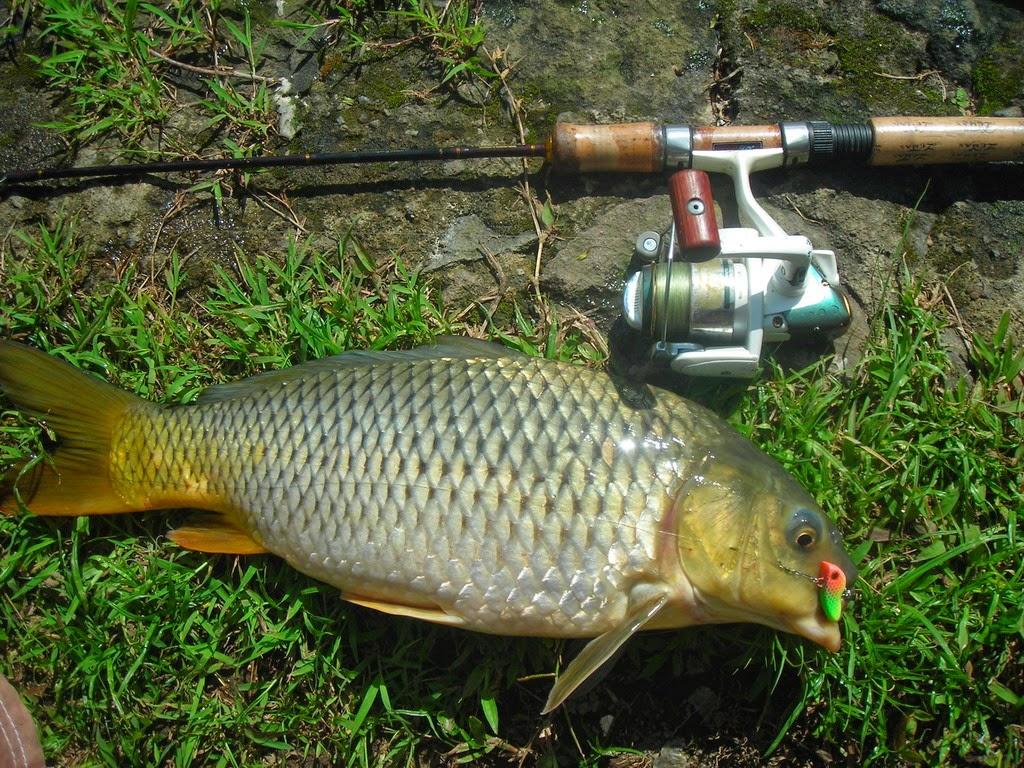 Warta Pancing Tip Tips Cara Mudah Memancing Ikan Tombro