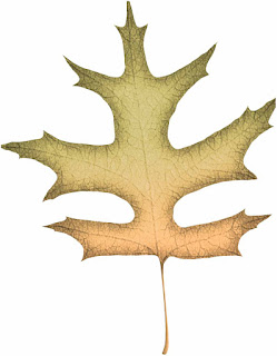 Pumpkin Spice Leaf #1 - free scrapbook element
