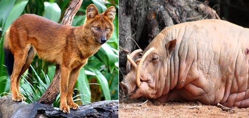 9 Unique Animals Found in Asia