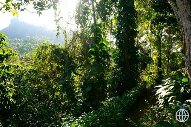zieleń na kubie