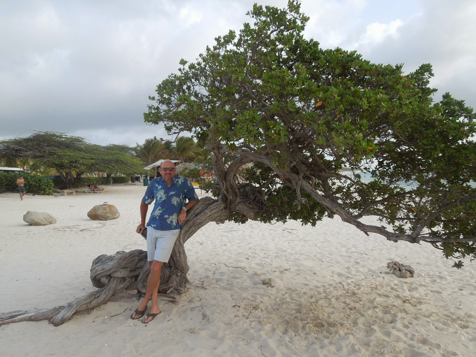 Ron and divi divi tree