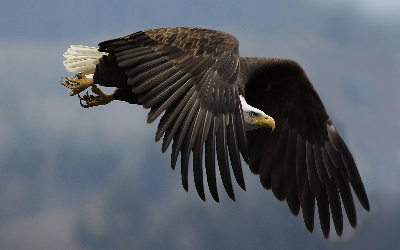 All Wallpapers: Eagles Birds Wallpapers