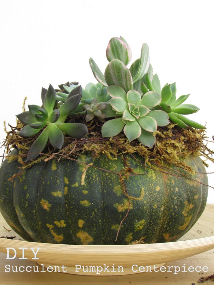 Valentina Vaguada: DIY, pumpkin, succulent, centerpiece, succulent arrangement