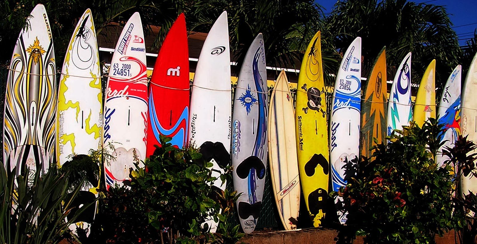 Windsurfing Maui: RECYCLED BOARD AND SAIL ART