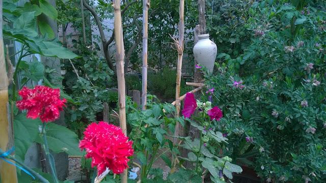 this is my beautiful organic garden