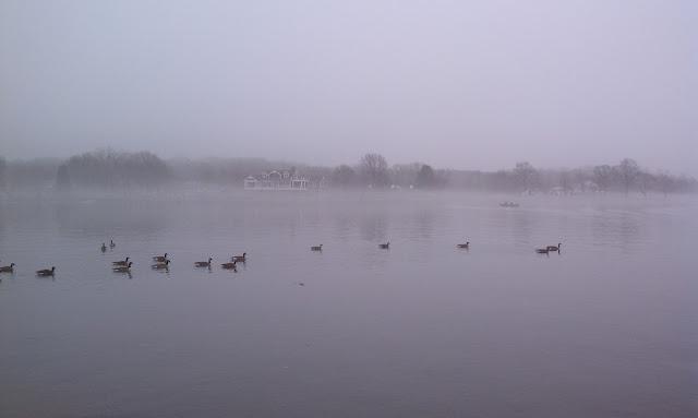 photograph, water, geese, fog, Chesapeake Bay